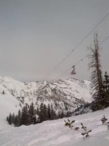snowbirdtram